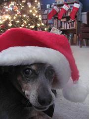 Dex_Christmas