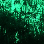 Green and the Space in Between